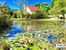 Self-Catering Cottages Knysna Froggy Pond