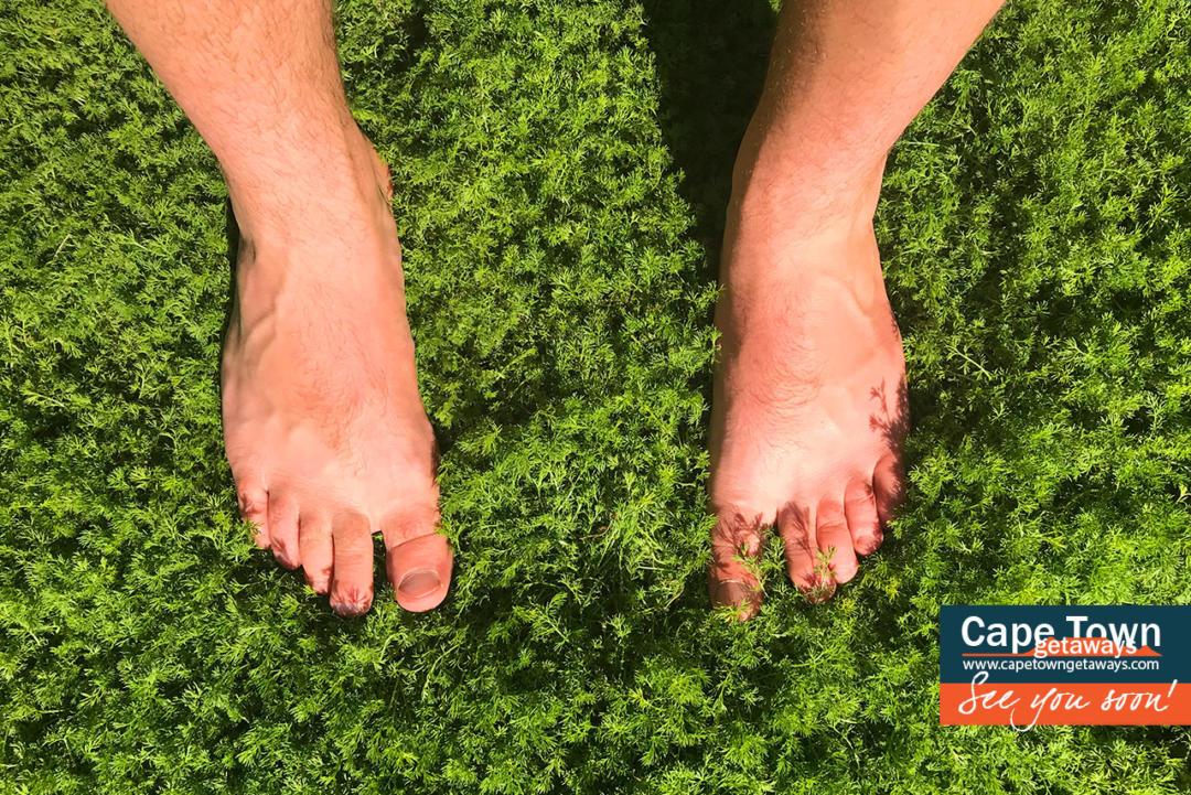 Babylonstoren Grass