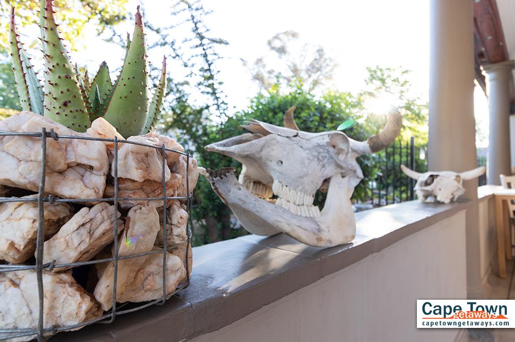 Plants and skulls